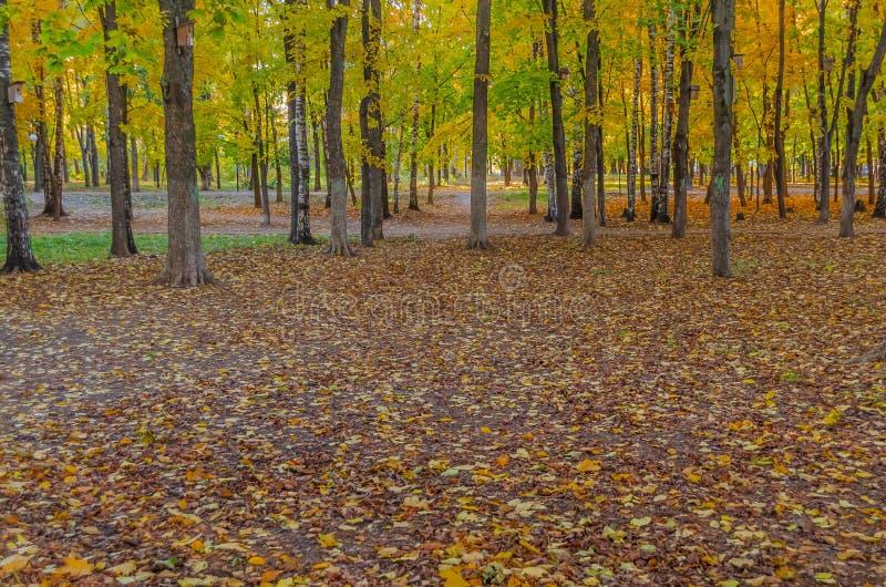 Упаденные листья и пожелтетые деревья с birdhouses в парке стоковое изображение