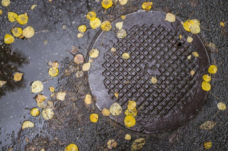 Упаденные листья лежат на влажном асфальте и крышке металла  стоковые изображения