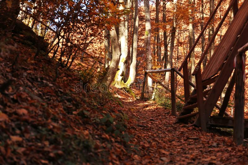 Упаденные листья на земле в лесе стоковое изображение rf