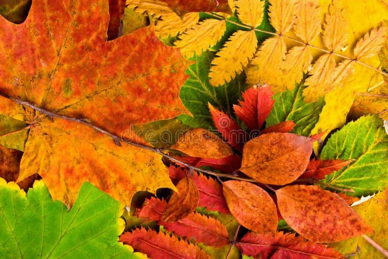 Упаденные листья осени стоковые фото