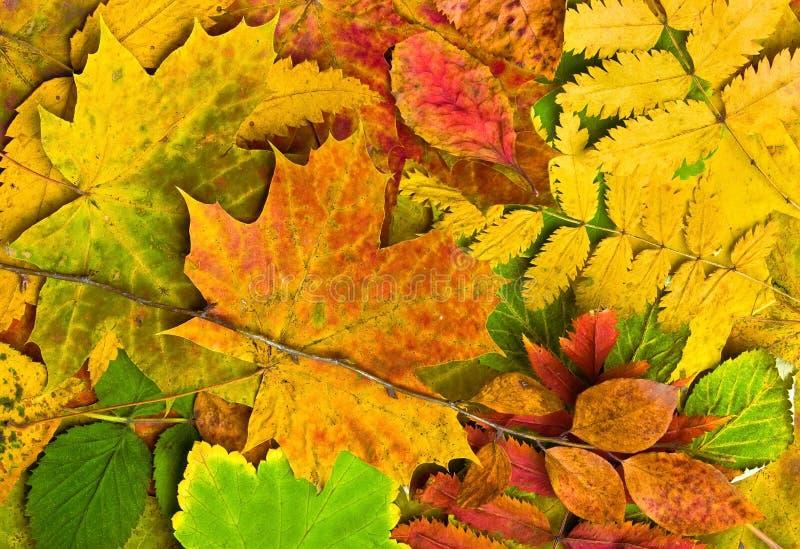 Упаденные листья осени стоковое изображение