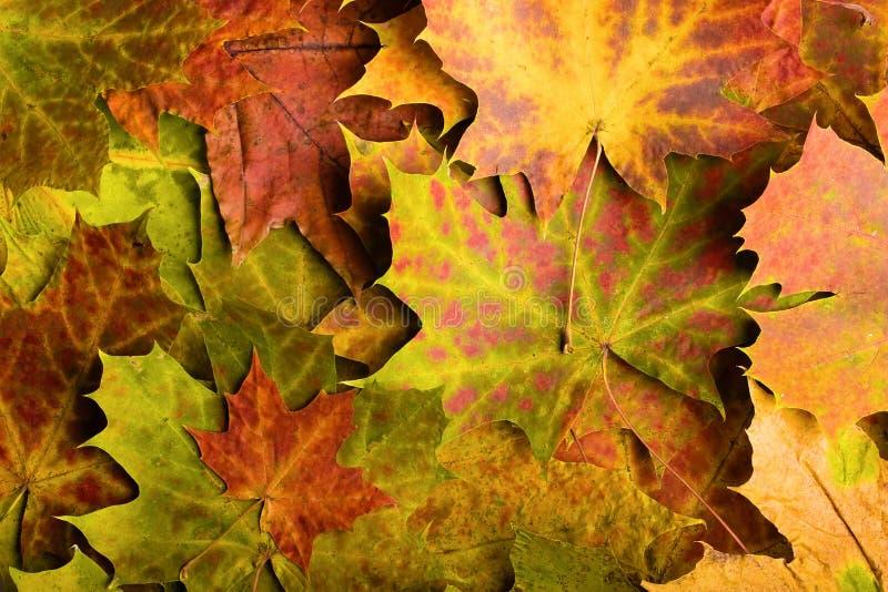 Упаденные листья осени стоковое фото rf