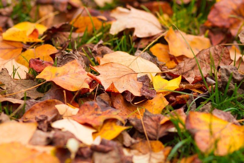 упаденные листья травы стоковые изображения rf