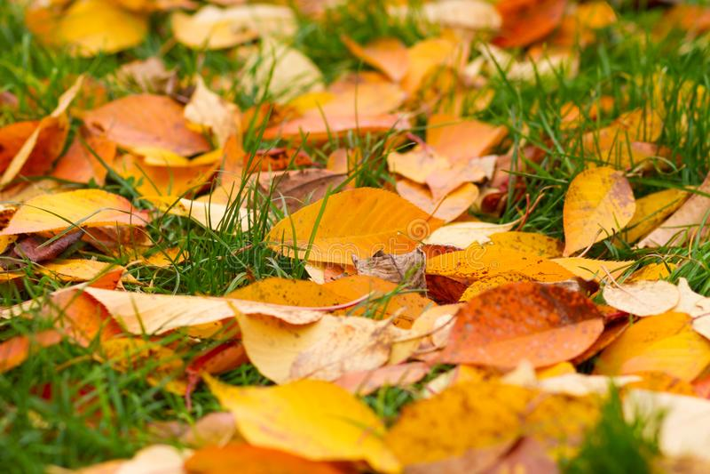 упаденные листья травы стоковая фотография