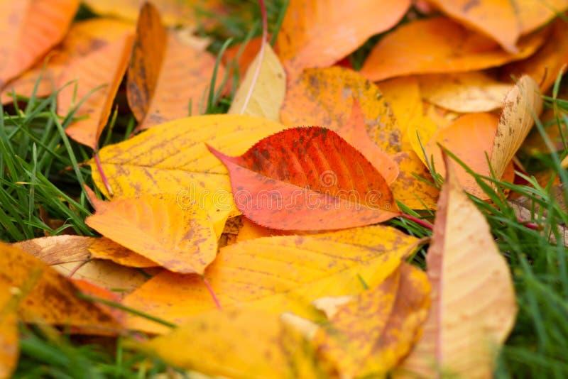 упаденные листья травы стоковые фотографии rf