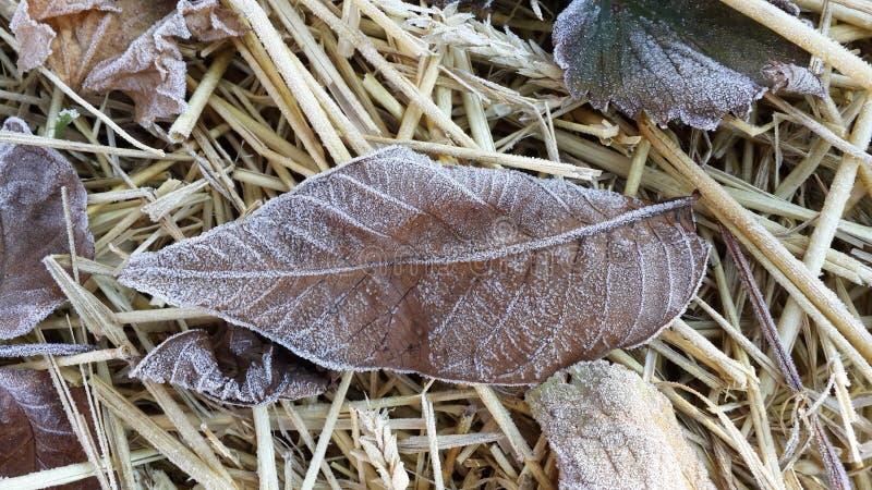 Упаденные лист осени в изморози стоковые изображения rf