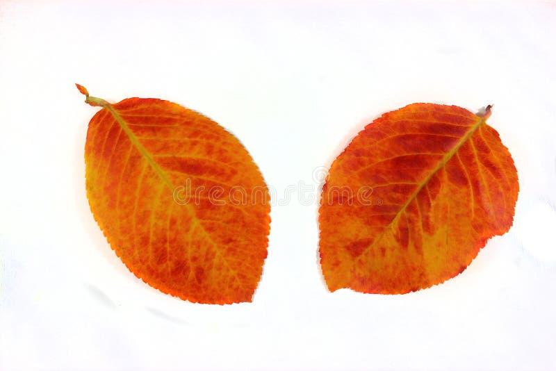 Упаденные Motley лист падения, на светлой предпосылке стоковое изображение rf