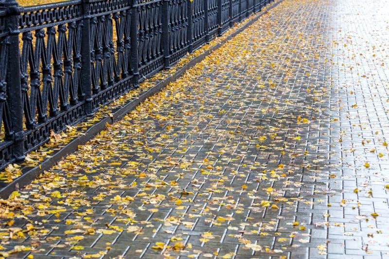 Упаденный желтый цвет выходит на поверхность влажного тротуара стоковое изображение