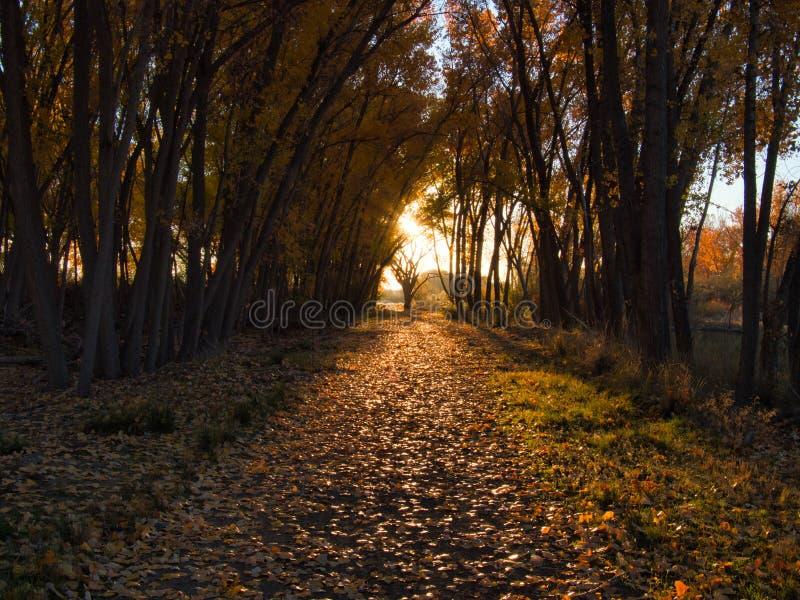Упаденный путь лист осени в Колорадо стоковые изображения
