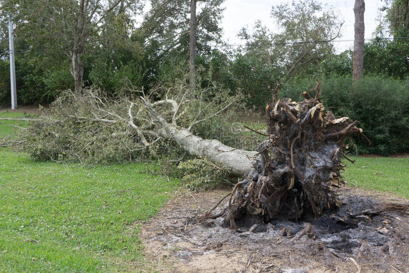 Упаденное дерево во время урагана стоковое фото