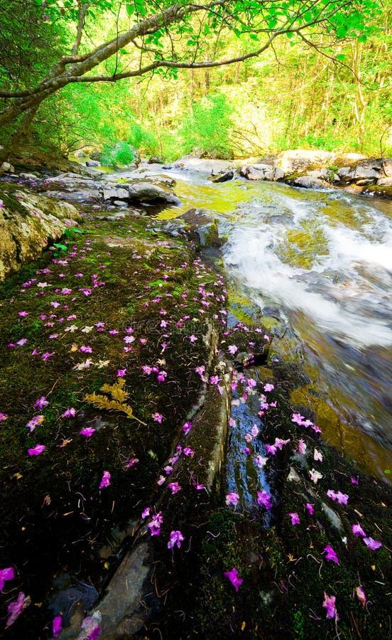 Упаденное bagulnik dauricum рододендрона цветет на потоке Smolny стоковое фото rf