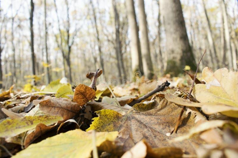 Упаденные листья и деревья стоковые фотографии rf
