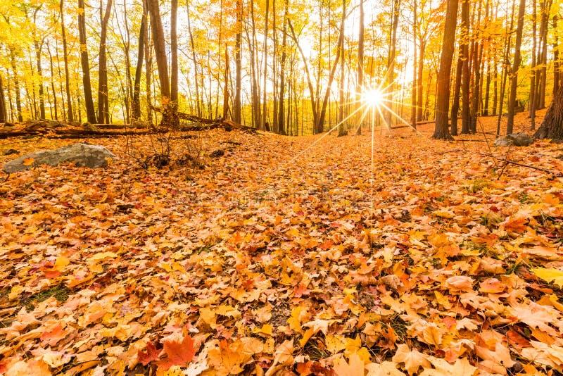 Упаденные листья и листопад стоковое изображение