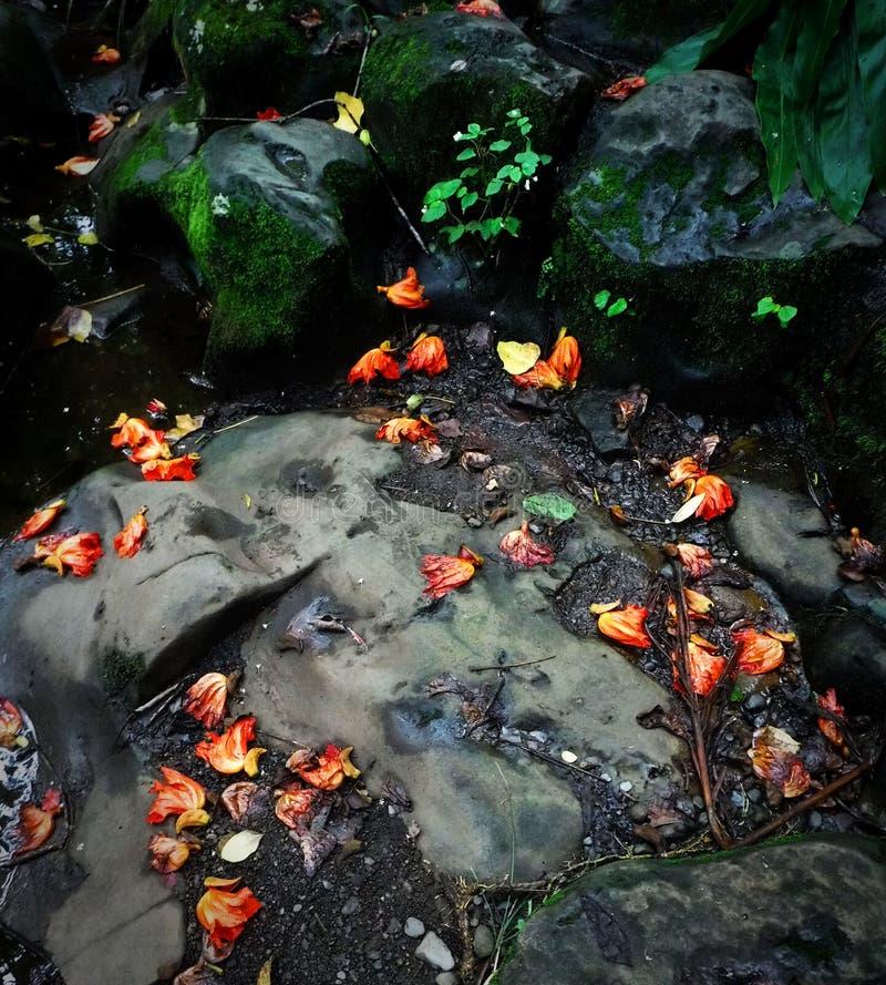 упаденные цветки стоковое изображение rf