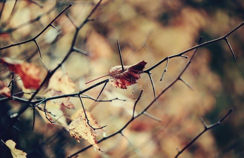 Упаденный боярышник лист осени стоковое изображение rf