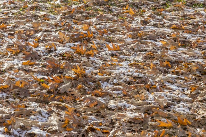 Упаденный дуб осени выходит покрывать землю под светлое dusti стоковые фото