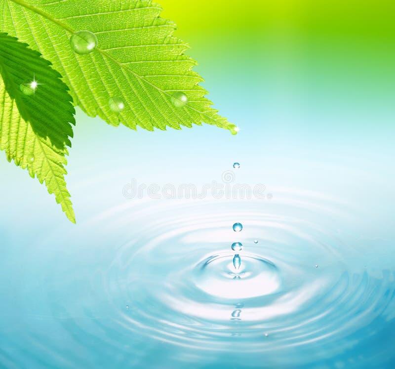 упадите вода листьев стоковая фотография