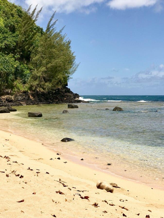 Уплотнение монаха на пляже, Кауаи, Гаваи, США стоковые изображения