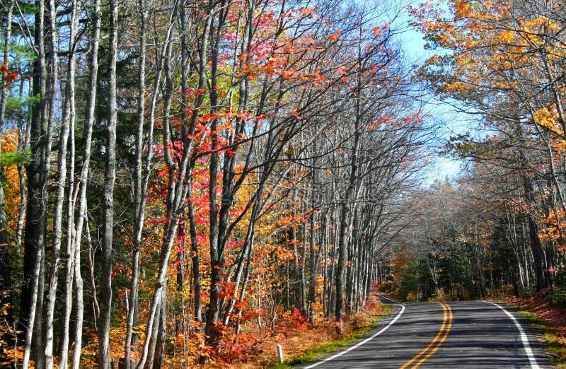 Управляйте через дерево осени стоковое изображение rf