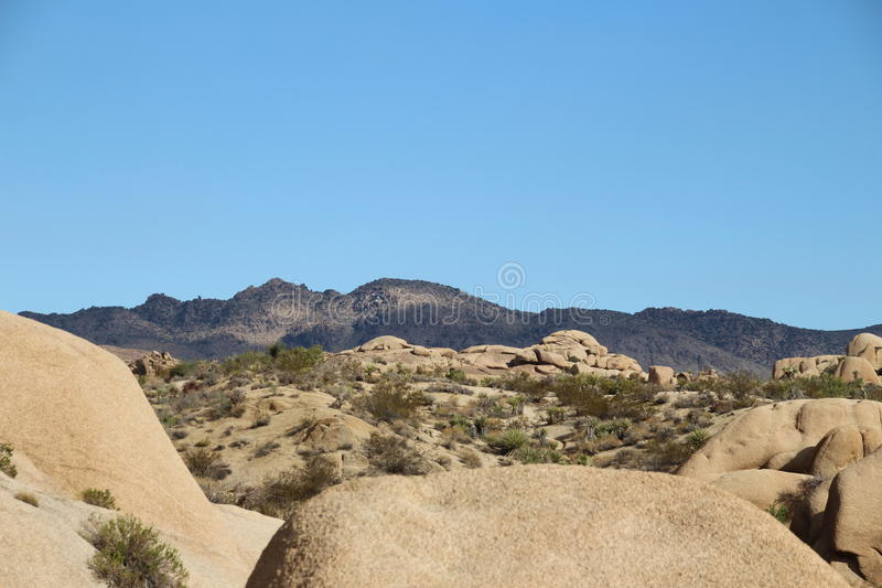 Уровни пустыни дерева Иешуа стоковое изображение rf