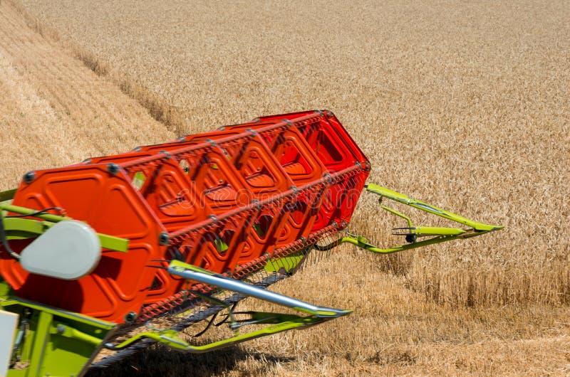 Урожается пшеница на поле стоковая фотография