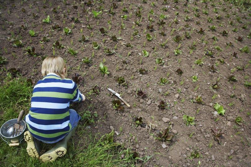 Урожаи мальчика засаживая в поле стоковые фотографии rf