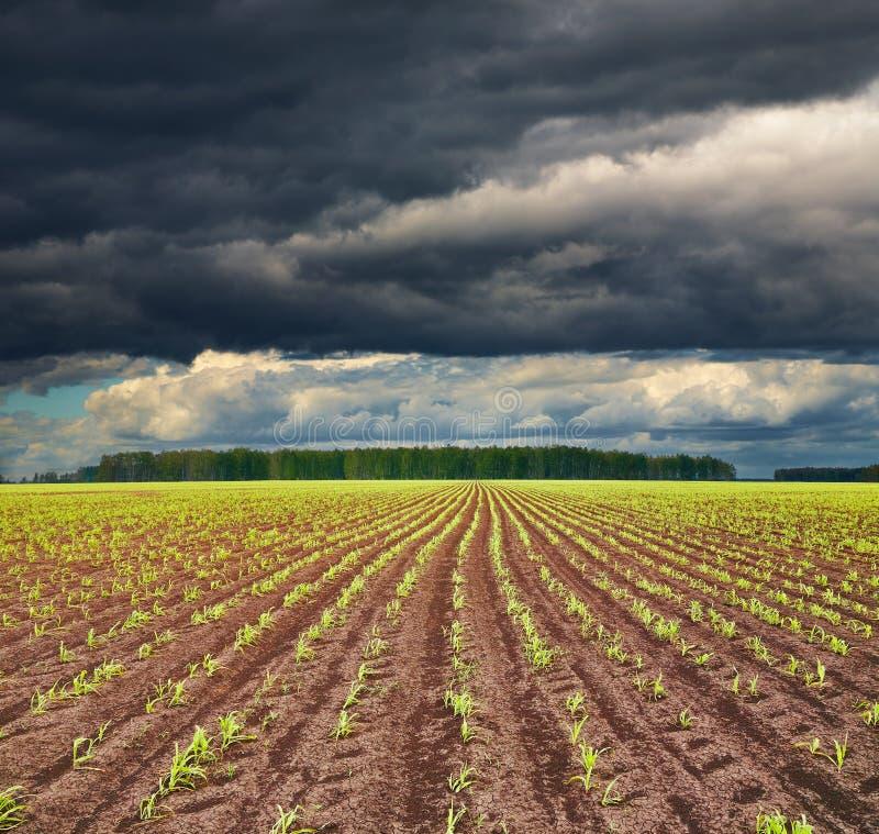 урожаи field пускать ростии стоковые изображения rf