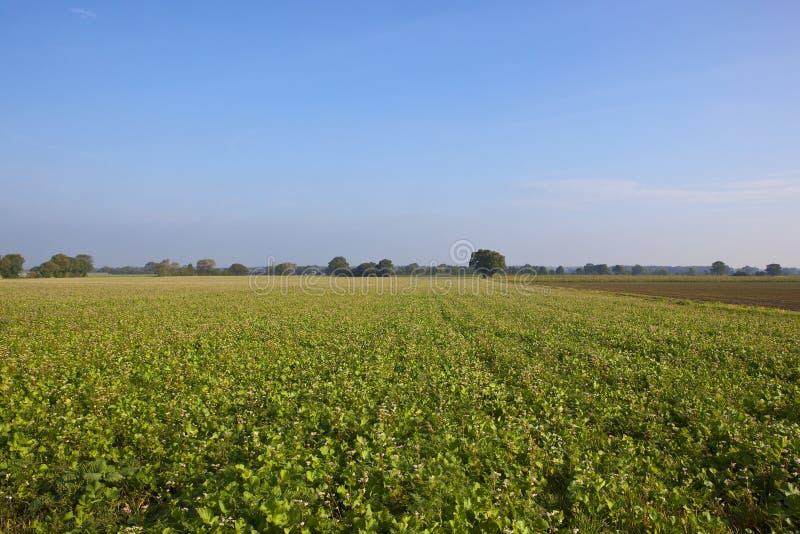 Урожай зеленого позема стоковое изображение rf