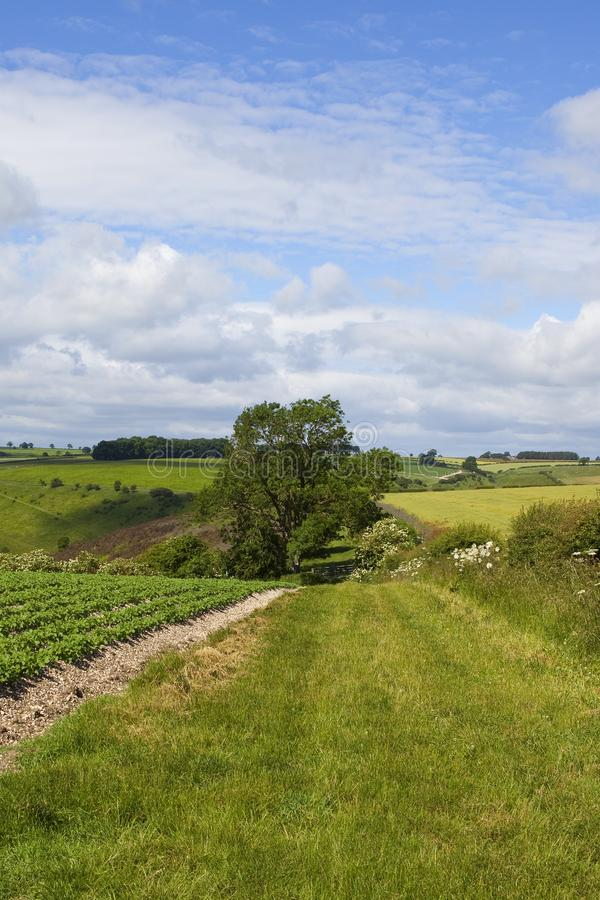 Урожай картошки и bridleway стоковое изображение