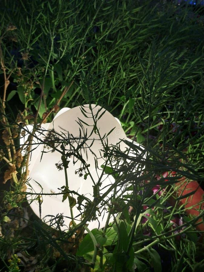 Урожай мустарда подрезывает со светом стоковые изображения rf
