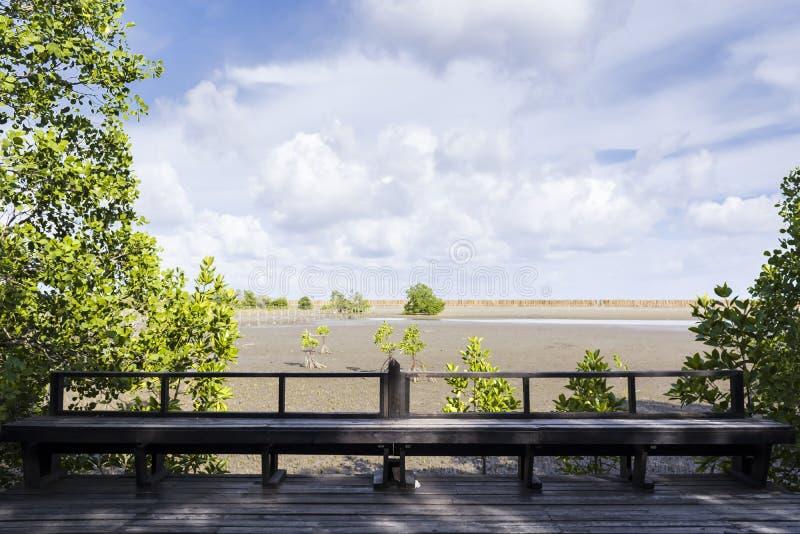 Усадите лес мангровы деревянного моста стоковые изображения rf