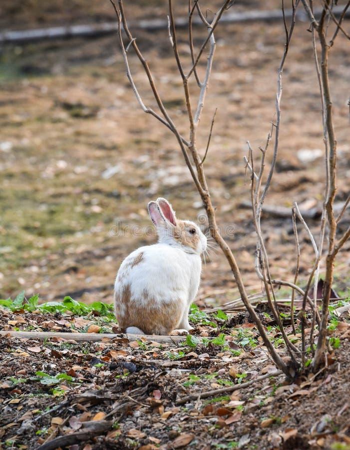 Усаживание кролика стоковые фотографии rf