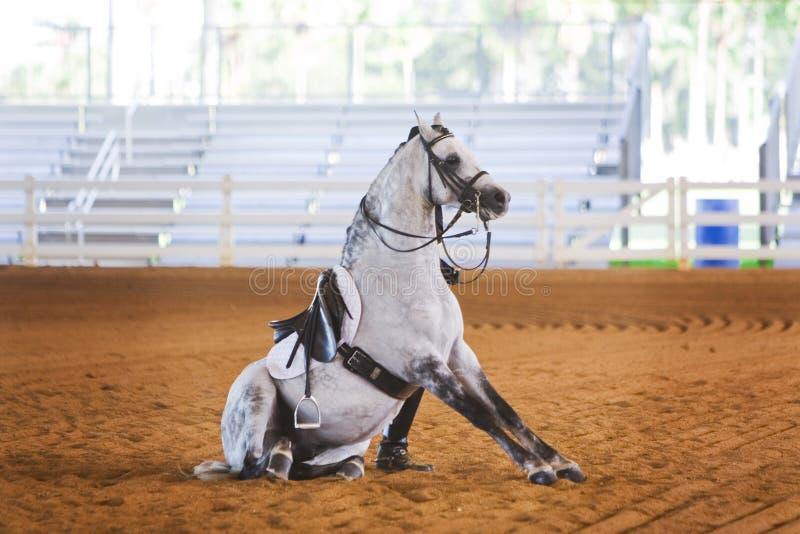 усаживание лошади dressage серое стоковые изображения
