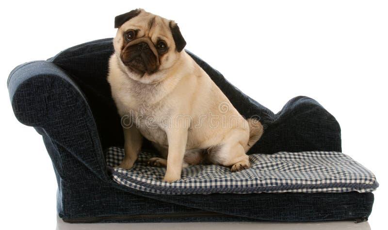 усаживание собаки кровати стоковая фотография rf