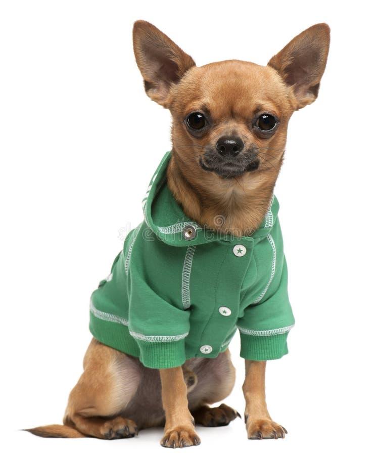 усаживание breed одетьнное собакой смешанное стоковые изображения
