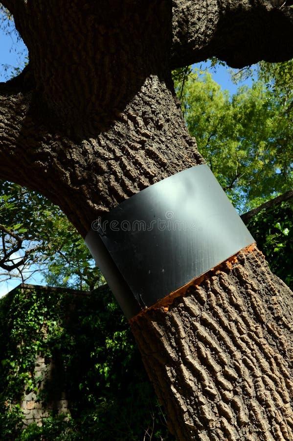 Усильте хобот дерева в саде Maragal Барселоны стоковые фотографии rf