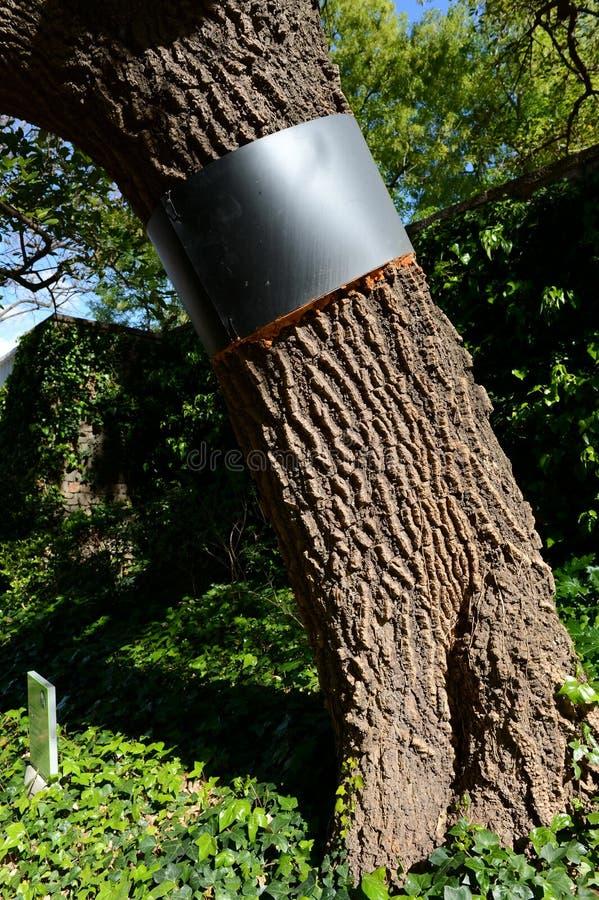 Усильте хобот дерева в саде Maragal Барселоны стоковое изображение