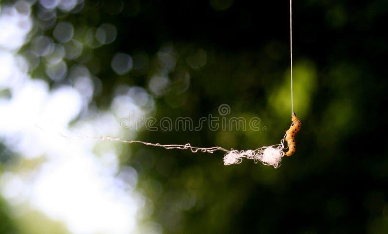 Усилие гусеницы стоковое фото rf