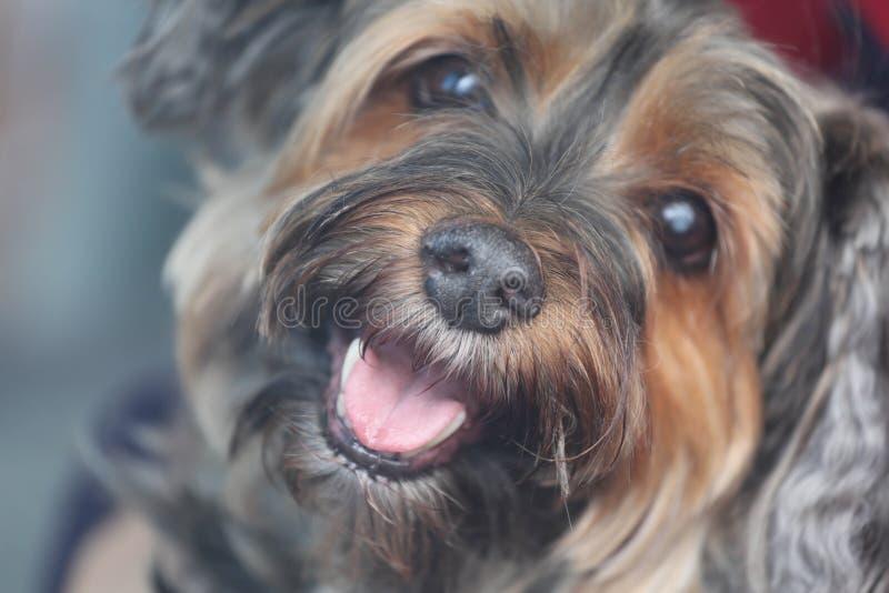 усмехаться собаки стоковые изображения rf
