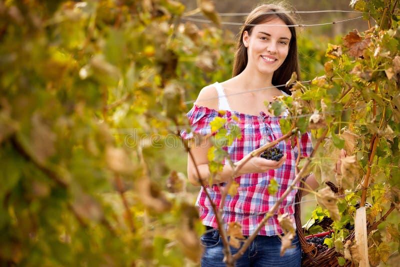 Усмехаясь женщина в винограднике стоковое фото