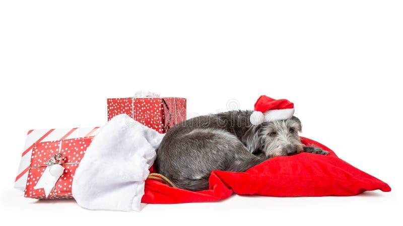 Уставшая собака Санта Клауса с подарками на рождество стоковое изображение rf