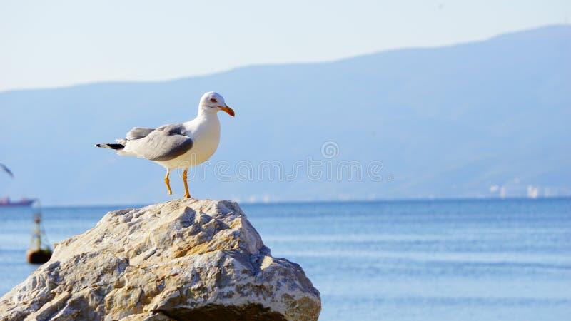 Усталые чайки на камне стоковые фото