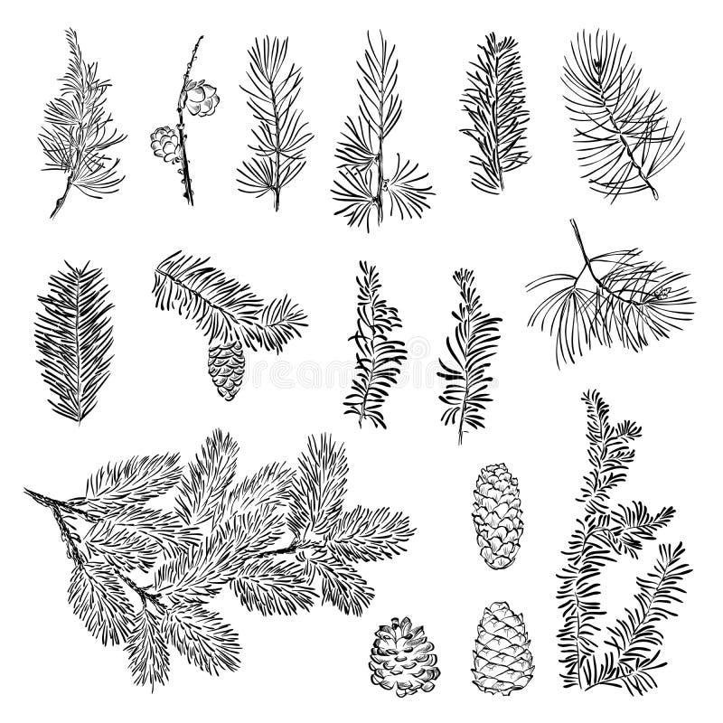 Установите ветвь рождества вектора бесплатная иллюстрация