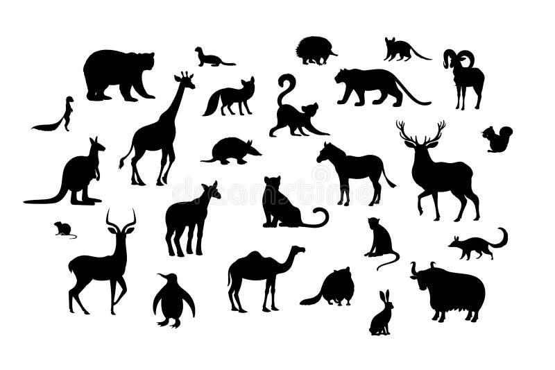 Установите животных силуэтов Лемур xerus ласки полевки енота quoll окапи numbat импалы ехидны оленей верблюда броненосца urial иллюстрация вектора