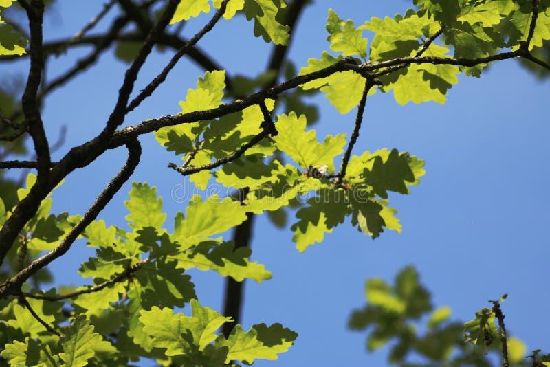 Установите зеленых листьев и ветвей дерева стоковые изображения rf