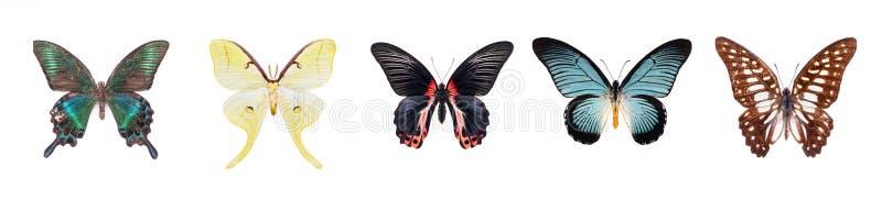 Установите красивых и красочных бабочек изолированных на белизне стоковая фотография rf
