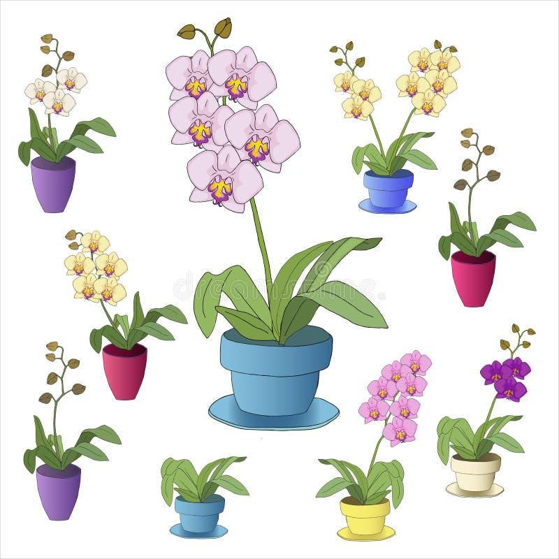 Красочные орхидеи на белой предпосылке стоковое фото
