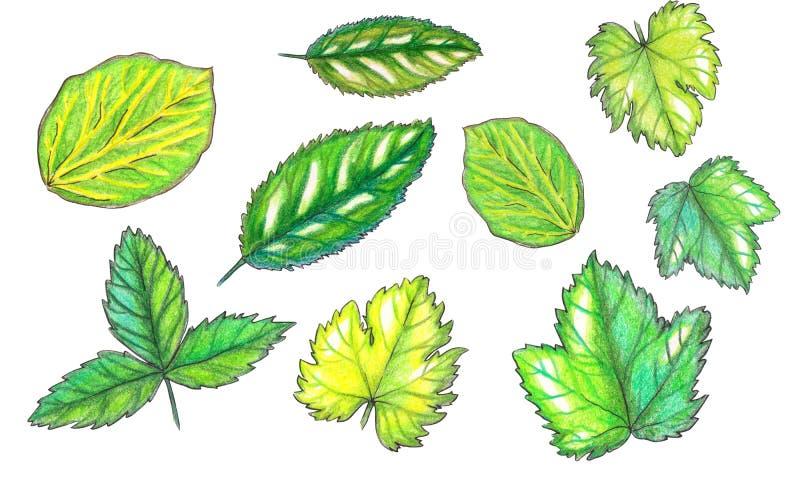 Установите листьев плода акварели бесплатная иллюстрация