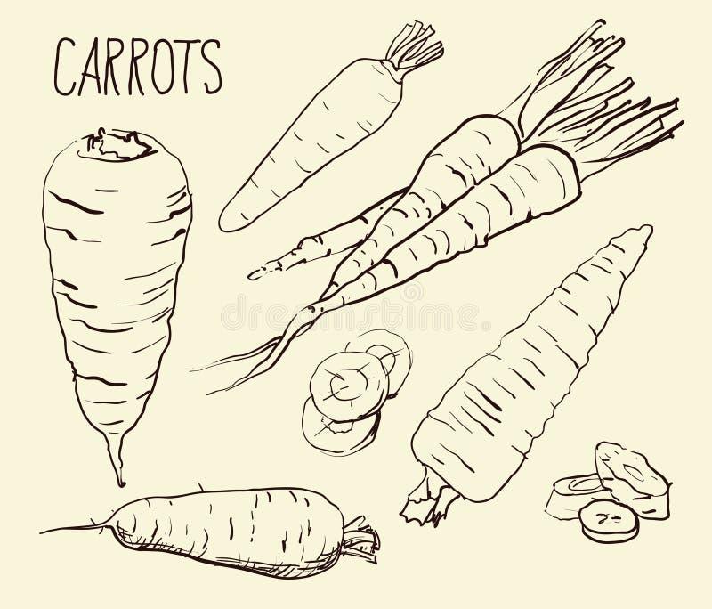 Установите морковей изолированный на белой предпосылке Овощи Питание вычерченная рука Силуэт, цвет, линия искусство - иллюстрация вектора