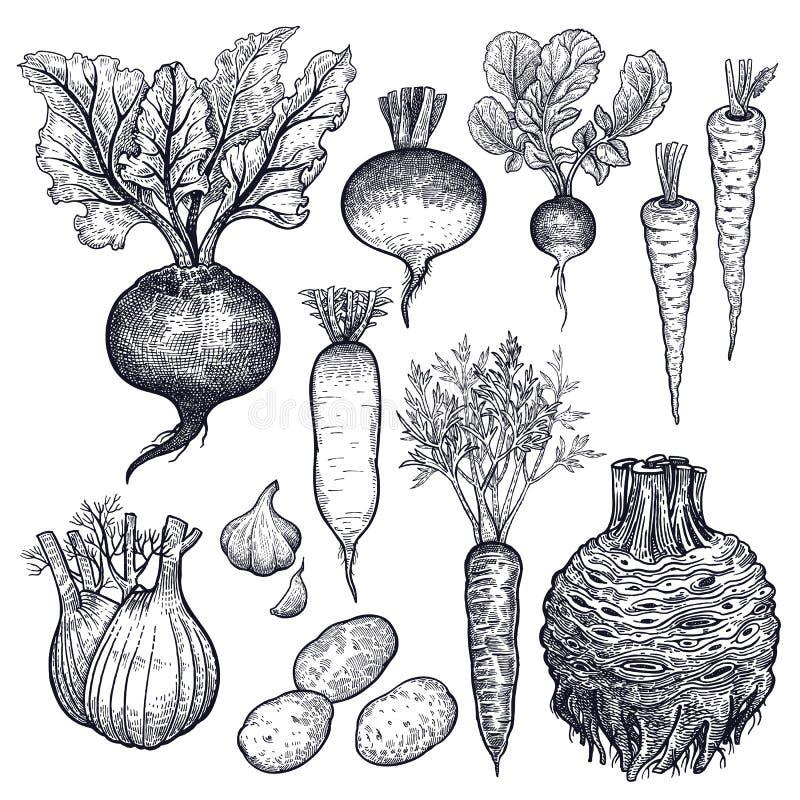 установите овощи Дизайн кухни иллюстрация вектора